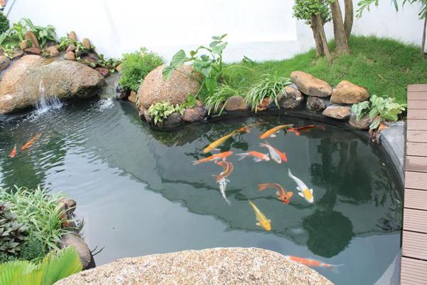 Cơ bản về bộ lọc cho hồ cá Koi, hệ thống lọc nước